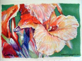 Canna Lilies Thanks you card by CelesOran