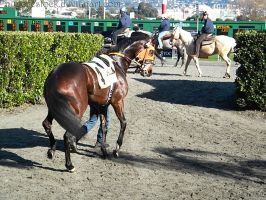 Golden Gate Fields - Racers 32 by Nyaorestock