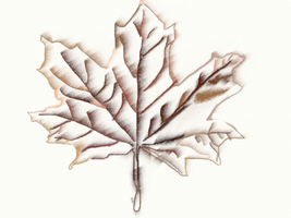 leaf1 by jayQueen