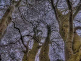 Cold trees by OliHDR