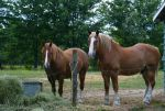 Animals - Horses 03 by Aimelle-Stock