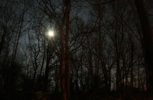 moonshine by LeaHenning