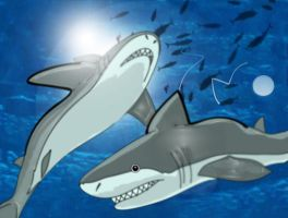 SHARKS AND TUNA by SCT-GRAPHICS