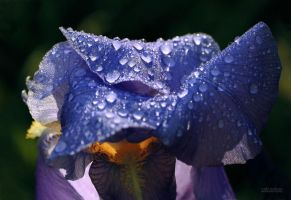 Morning Dew by valiunic