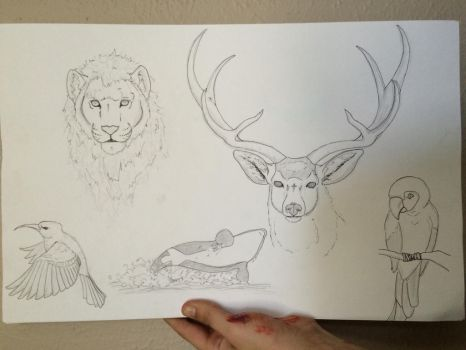 Sketches by sjcrossley