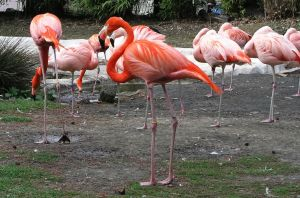 Flamingos by UdoChristmann