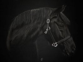 Big black horse... by Melwe