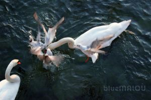 Seagulls attacks Swan200 by blueMALOU