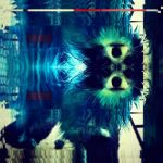 Blue Dog by johnsand
