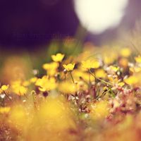 Yellow by EliseEnchanted