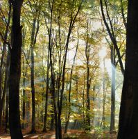 sun in beechen forest by Wilithin