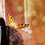 .the day I learn to fly. by awphotoart