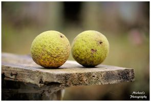 Black Walnuts by TheMan268