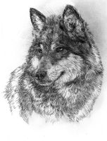 Timber Wolfish Dog Pet Portrait Drawing by SpiritedFool