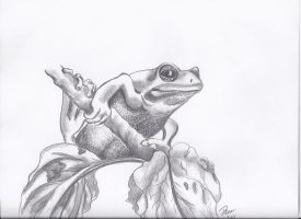 Froggie by Tara1974