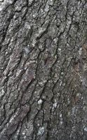 Tree Bark 1 by 3-sisters-stock