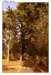 Trees in October by ShlomitMessica