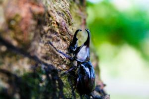 a beetle by andreawan