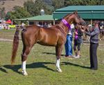 STOCK - Canungra Show 2012 006 by fillyrox