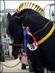 Shire Horse Show: Stallion 10 by ladyepona