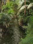 Jungle River by SiberianClover-Stock