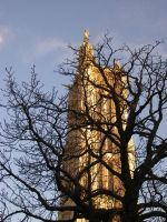 Arborial Cathedral by lucky-april