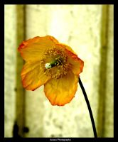 A Flower by Arawn-Photography