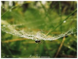- SpiderSpins II - by kissesfrom