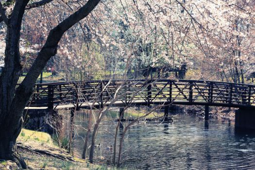Cherry Hill by isio88