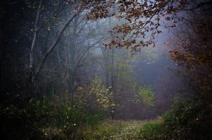 The mystic's path by erynlasgalenphotoart