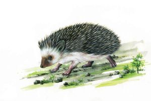 porcupine by thienquang