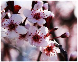 Sweet Pink Blossoms by GrotesqueDarling13