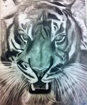 Bengal tiger drawing by EziaFallingstar