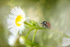 Ladybug's World by Zelma1
