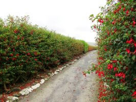 The fuchsia pathway stock by LittleOph