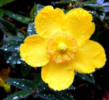 Raindrops + Flower by BlonderMoment