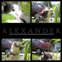alexander, eater of plants by secondmagpie