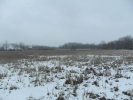 Snowy Plain 4 by TornPageDyedRed