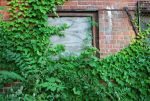 Overgrown Window by coffeenoir