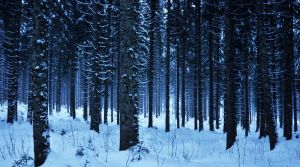 Snowy forest by Artwork-Production