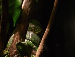 Green Snake by yellow-jester-kitty