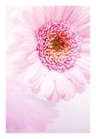 Pink I by Michelano