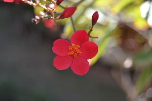 Red Flower by FrankAndCarySTOCK