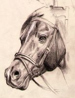 A horse sketch by oosterbe