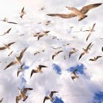 Seagulls by nurtanrioven