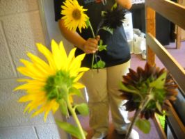 Sunflowers Reflected in Mirror by InsanePaintStripes