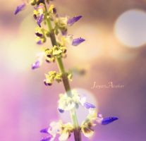 Lavender-fill by Photoloaded