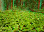 The Green Carpet 3D Anaglyph by yellowishhaze