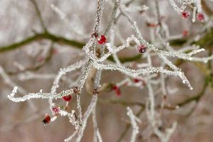 Winter's frost by beautythroughalens