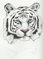 Tiger WIP by Lucky101212